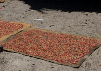 Cloves drying in the sun