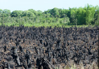 THE major problem in Madagascar: forests are being burned for (among others) charcoal production.